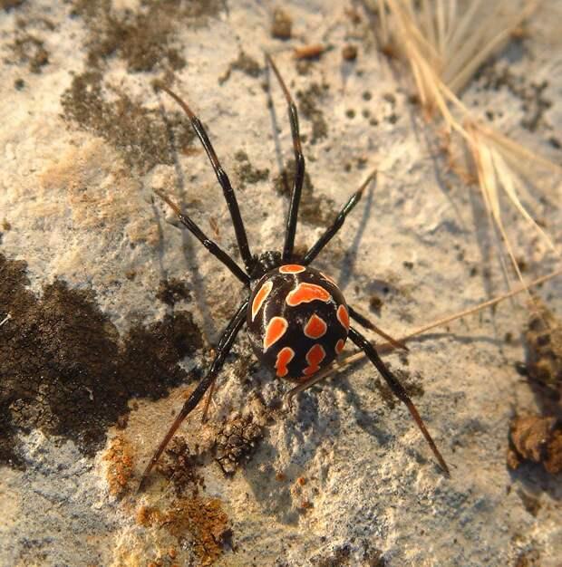 Смертельно опасные пауки заполонили Ростовскую область