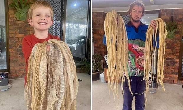 Семья была в ужасе, обнаружив на чердаке 50 змеиных шкур, но это совсем не страшно