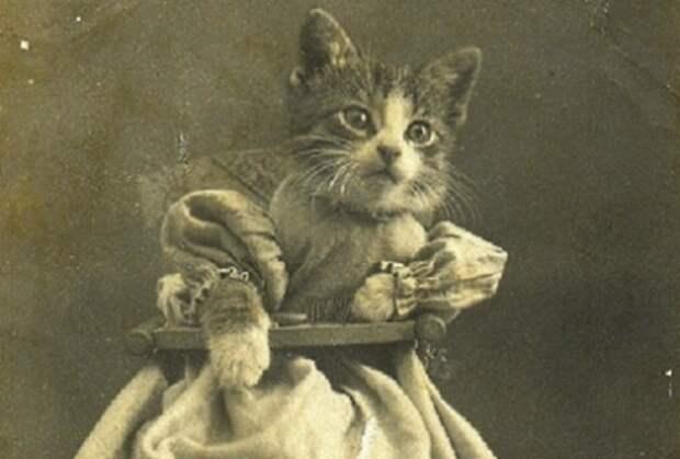 10 самых необычных примеров почитания кошек в истории