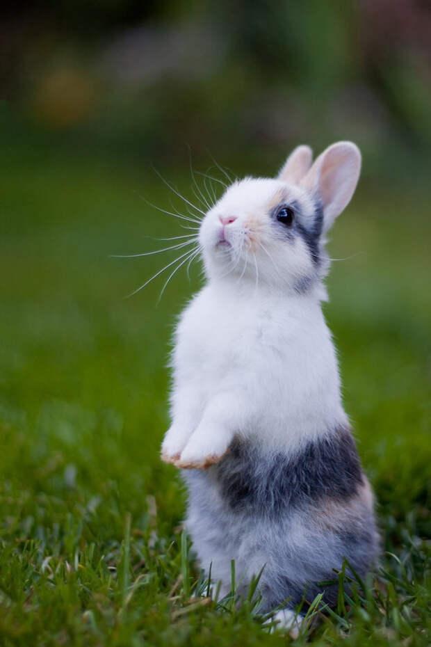 Милые, пушистые и позитивные кролики с зайками
