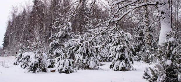 «Вагнеровцы» продолжают скрываться в белорусских лесах»