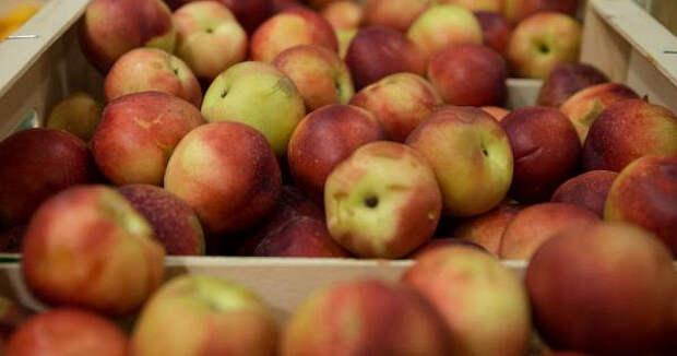 Ученые рассказали, почему вечером нельзя есть фрукты