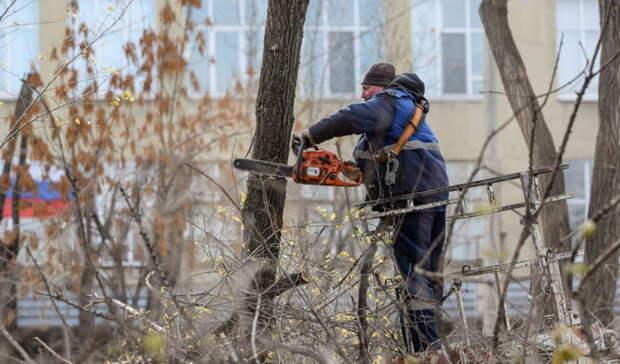 Ростовским предпринимателям разрешили невысаживать деревья взамен срубленных