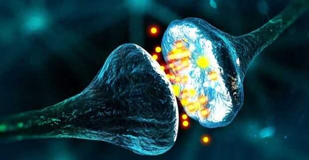 В США ученые научились понимать язык клеток живого организма
