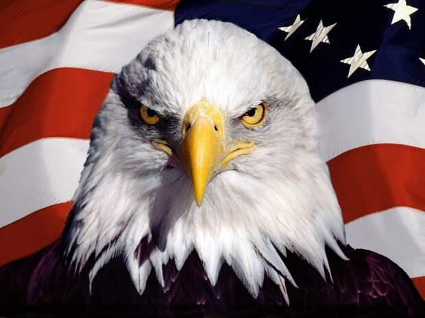 Два белоголовых орлана, дерущихся в канализации на улице в США, напомнили прохожим выборы
