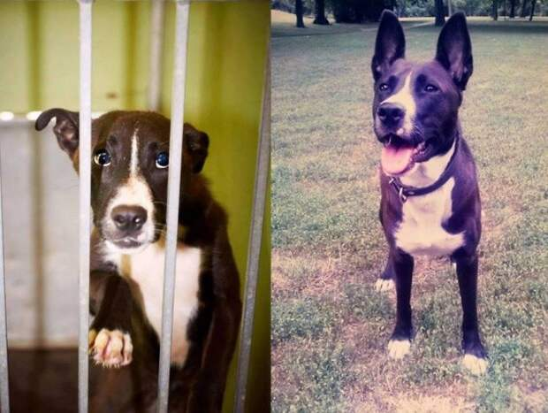 12 фотографий собак, нашедших свой дом потеряшки, приют для собак, собаки