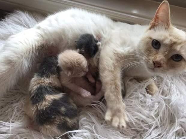 Кошка перестаёт угрожающе рычать, когда зоозащитница доказывает, что желает её котятам только добра
