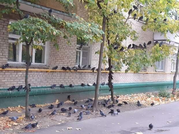Фото дня: голубиный митинг на Дмитровке