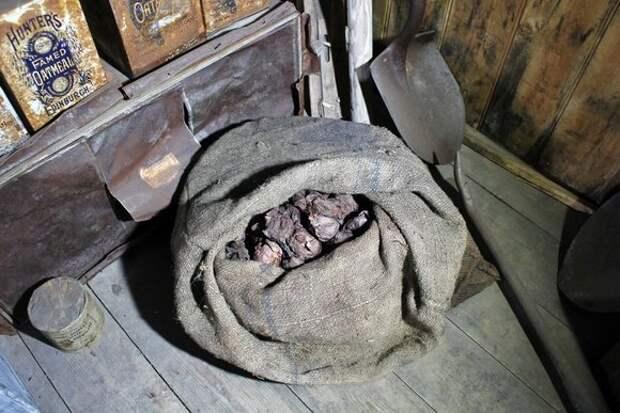 В Антарктиде нашли столетний мешок лука