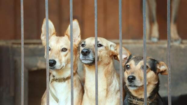 Зоозащитник: Поручения Путина по защите животных следует исполнить