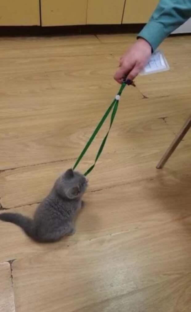 Хозяева оставили котенка в аэропорту Екатеринбурга из-за необходимости доплачивать