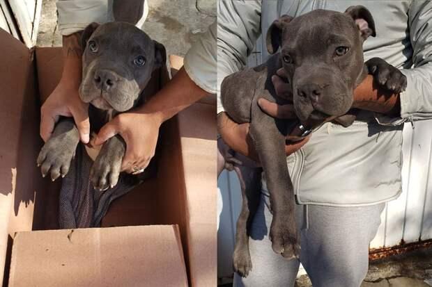 На пороге приюта нашли щенка с душераздирающей запиской