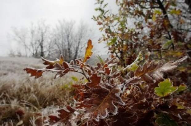 Синоптики предупреждают о первых заморозках в Калужской области