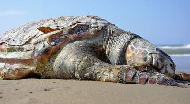Массовую гибель морских животных выявили на берегах Шри-Ланки