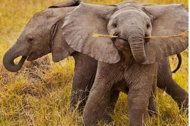 Чего ещё мы не знали о мире животных: удивительные факты!