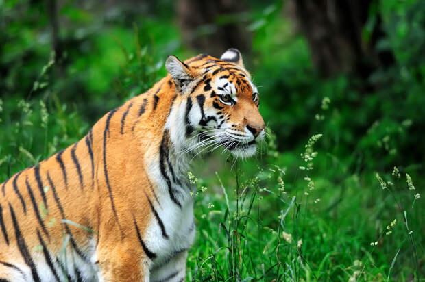 Минприроды сообщило об угрозе вымирания 13 видов животных в России
