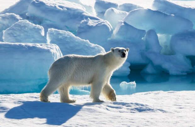 Большой Арктический заповедник – INFOnotes