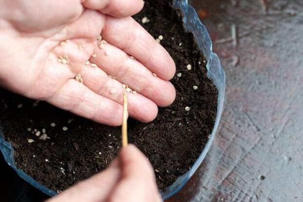 Как добиться стопроцентной всхожести семян