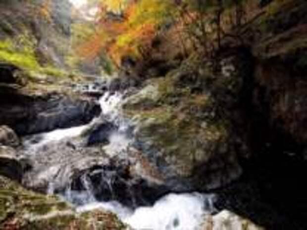 Осенний лес Кирю