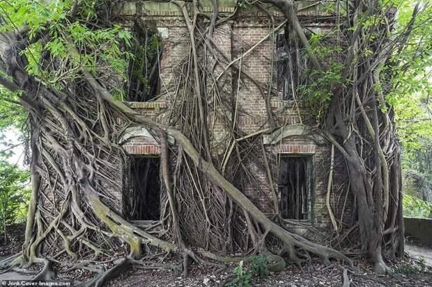 Старый особняк на Тайване оказался под властью деревьев
