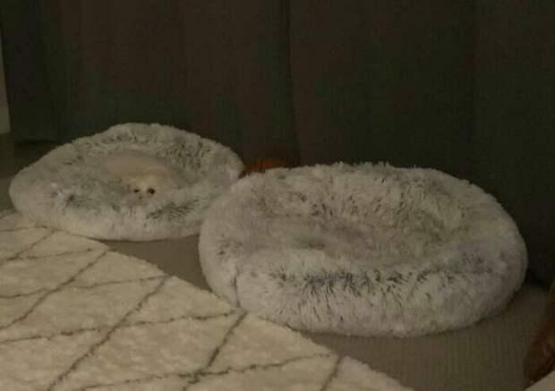 Найди меня, если сможешь: 30 собак, которые овладели искусством маскировки
