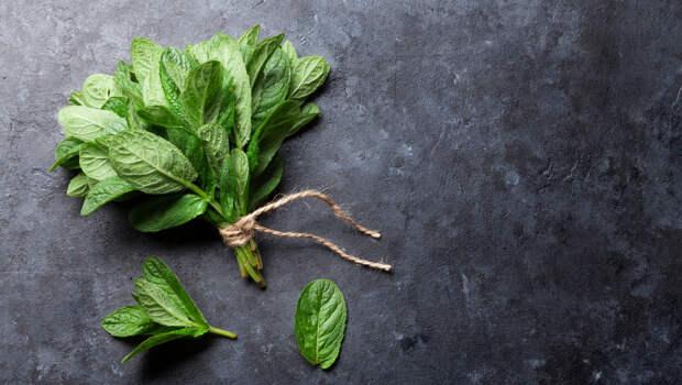 Лекарственные растения, которые можно вырастить на подоконнике