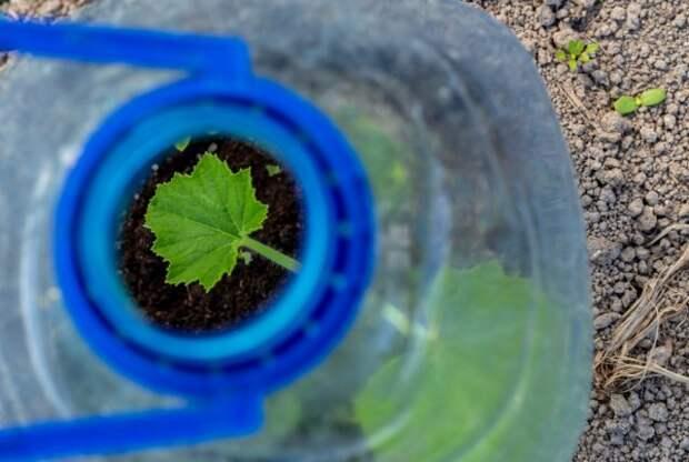 7 способов применения 5-литровых пластиковых бутылок на даче