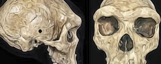 Родезийский череп. Выстрел в голову возрастом 300 000 лет