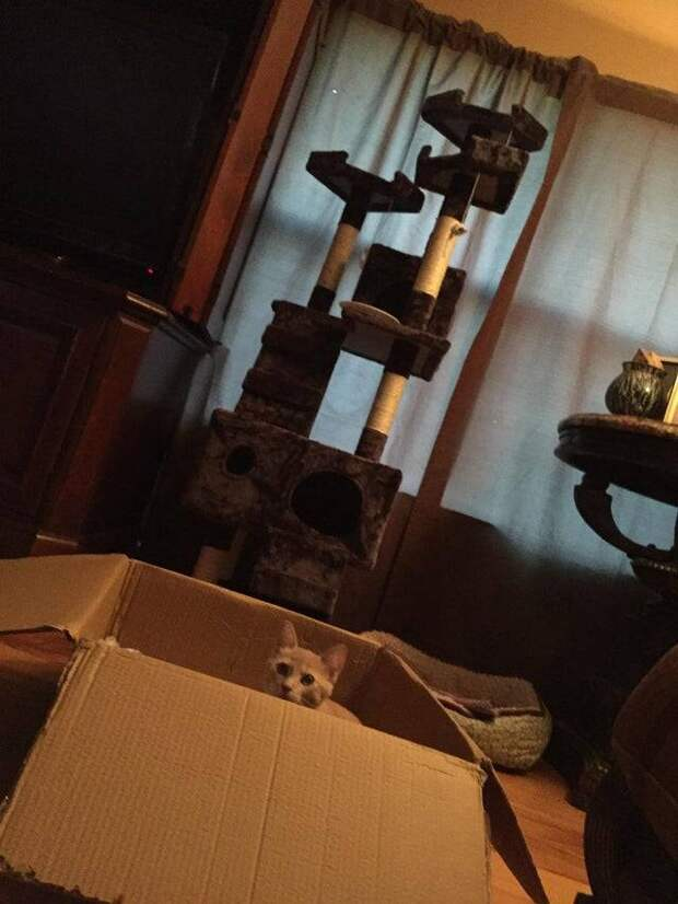 12 фото, доказывающих, что лучшие друзья котов – это коробки