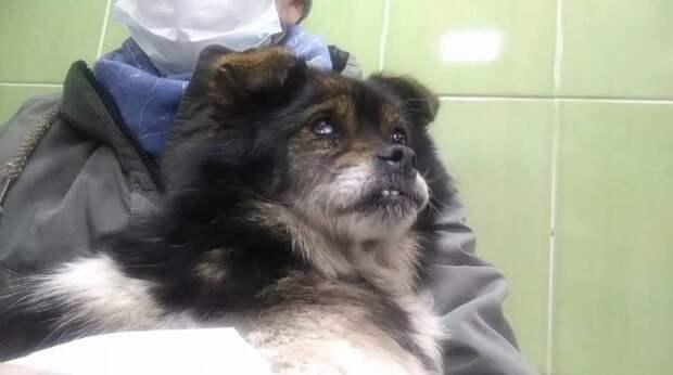 5-Полу-слепая собака выживала в ящике у трассы. Ее просто выгнали из дома