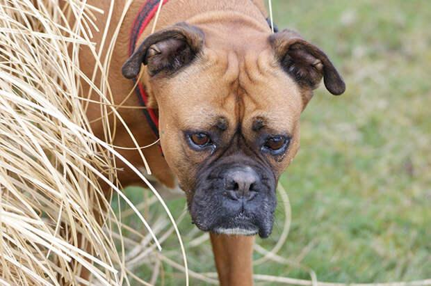 Потрясающая история пса-путешественника, которой не возможно не поделиться