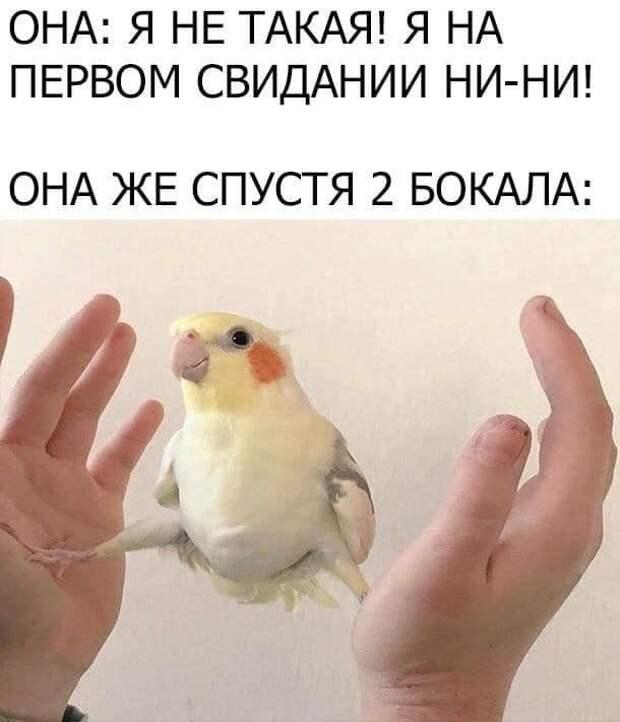 """Приколы и мемы про отношения и """"кое-что"""" еще"""