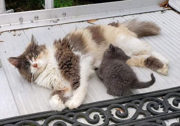 Бродячая кошка прятала новорожденных котят в дровах история, история спасения, коты, кошка, кошки, помощь животным, спасение животных