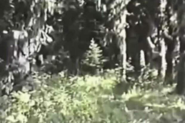 Видео, когда снежного человека возможно сняли на камеру