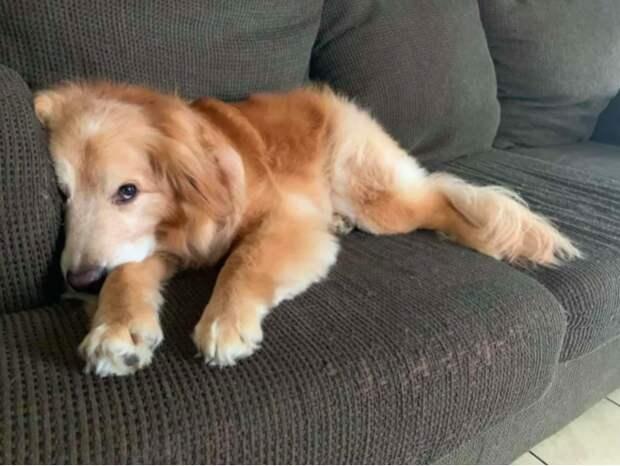Собаку, который скалился на посетителей приюта, собирались усыпить. Но он все же нашел себе хозяина