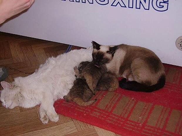 Фермер сразу понял, что это необычные котята, но совесть не позволила продать их