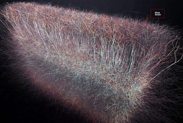 Как на небе, так и под ним: Ученые обнаружили в нашем мозге целую вселенную с множеством измерений