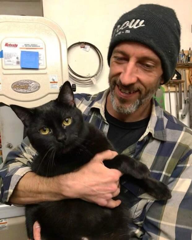 Вот в какого красавчика превратился Гризли! до и после, история, история спасения, коты, котята, кошки, мило