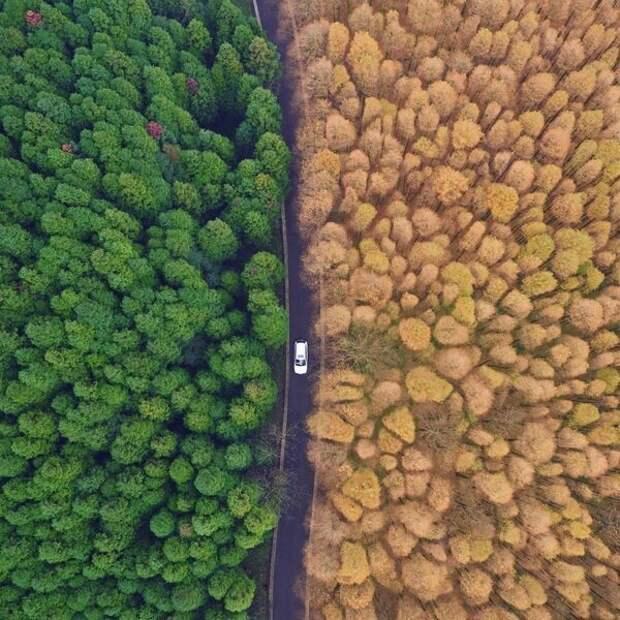 16. Автомобиль движется между лесами красного дерева и японского кедра на территории национального эко-парка в городе Чунцин на юго-запад Китая. контраст, красота, нефотошоп, новое и старое, различие, россия, фотография
