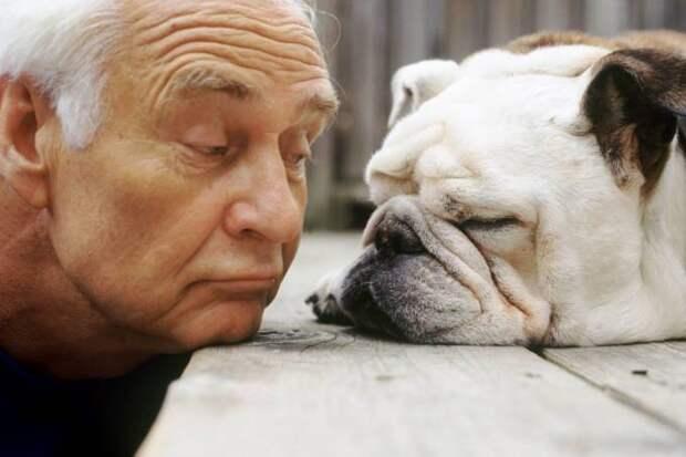 Породы собак, идеально подходящие для пожилых людей