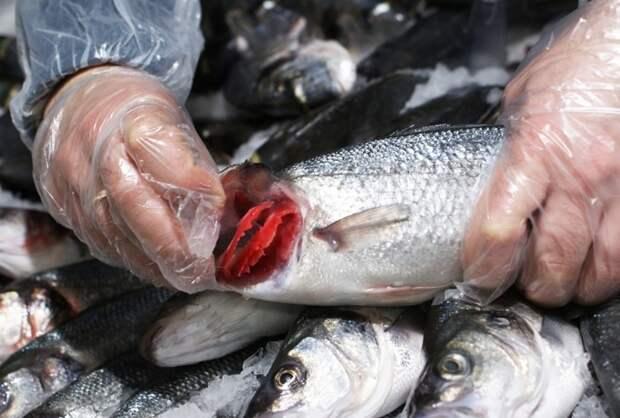 Ярко-красные жабры - признак свежести рыбы / Фото: vi.ill.in.ua