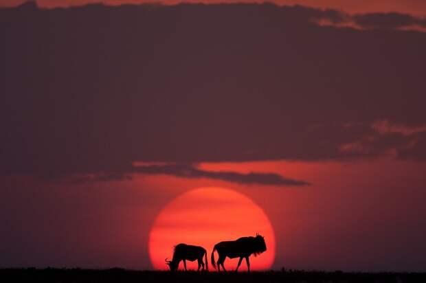 afrikanskie zakaty 6 Потрясающие африканские закаты от Пола Гольдштейна