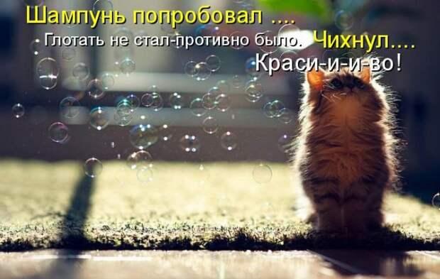 Хорошее настроение вместе с котиками