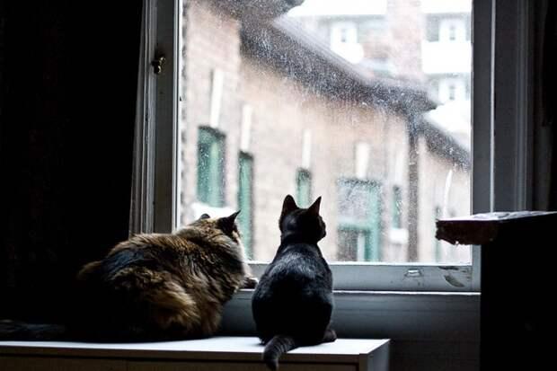 7239660-R3L8T8D-650-cat-waiting-window-30