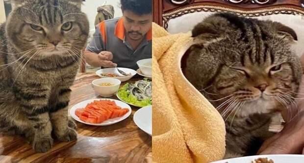 История о ревнивом коте, который стал звездой интернета