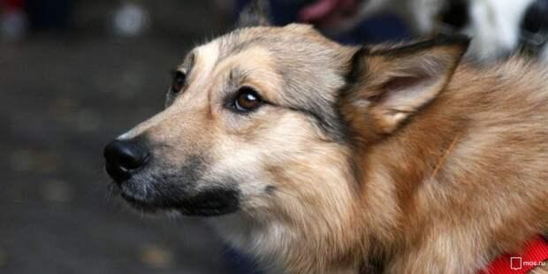 Возле «Дубровки» заметили стаю агрессивных собак
