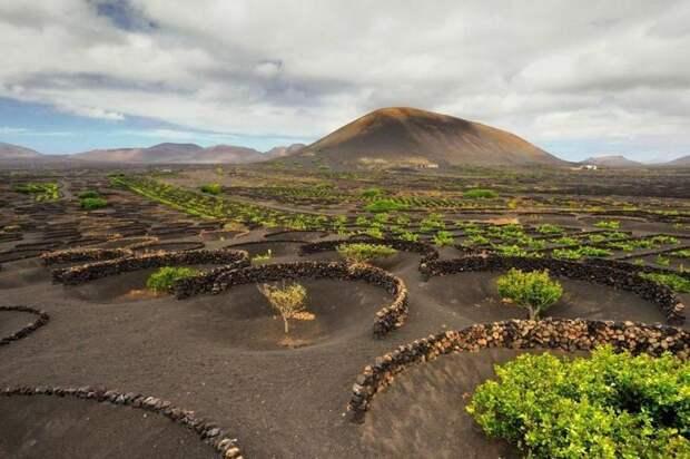 Невероятные сады Лансароте: что испанцы выращивают в круглых ямах из пепла