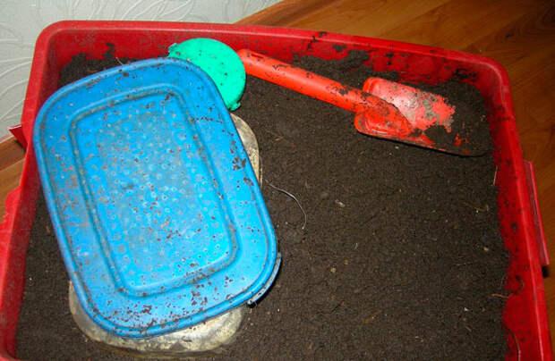 Разведение навозного червя в домашних условиях