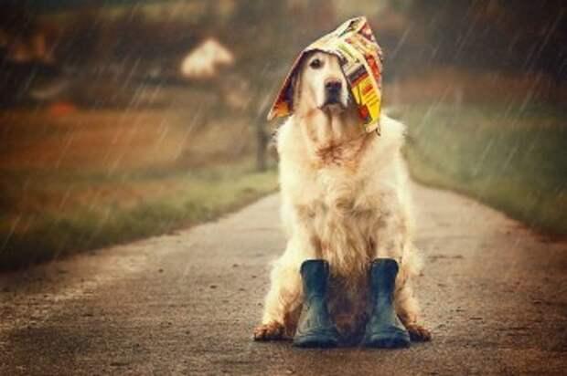 Выходные в Калуге будут тёплыми, но дождливыми