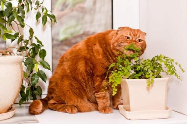 Растения и домашние животные
